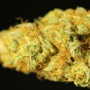 Agent Orange Strain Information & Reviews | Where's Weed